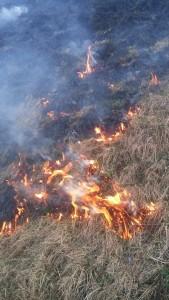 Vaja operative: Požar v naravi 28.3.2017